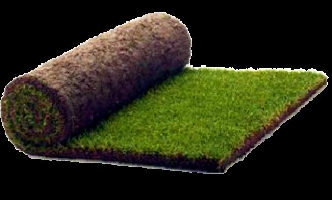 , Рулонный газон (газонная трава)